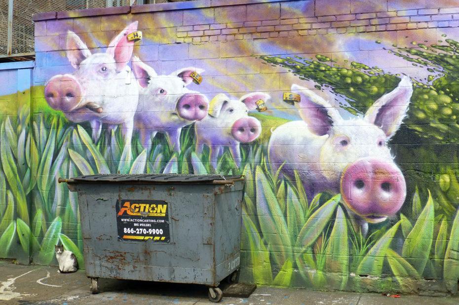Cochons dans un pré