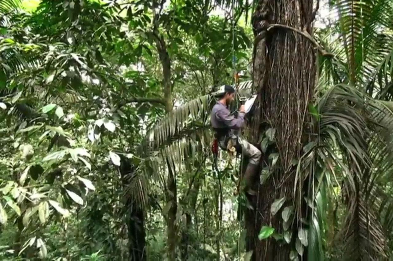 Ralph Garcia au niveau de la canopée, son terrain d'étude de la forêt costaricienne
