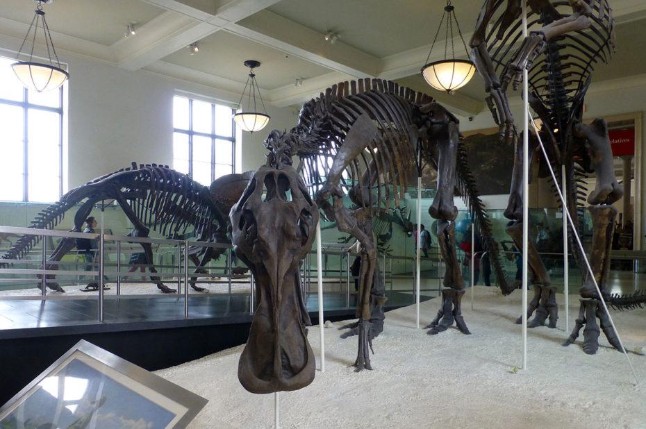 Anatotitan, dinosaure de la famille hadrosauridé