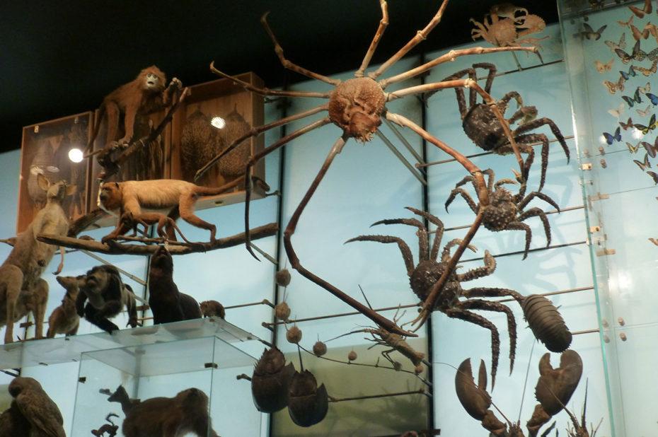 Créatures terrestres et marines