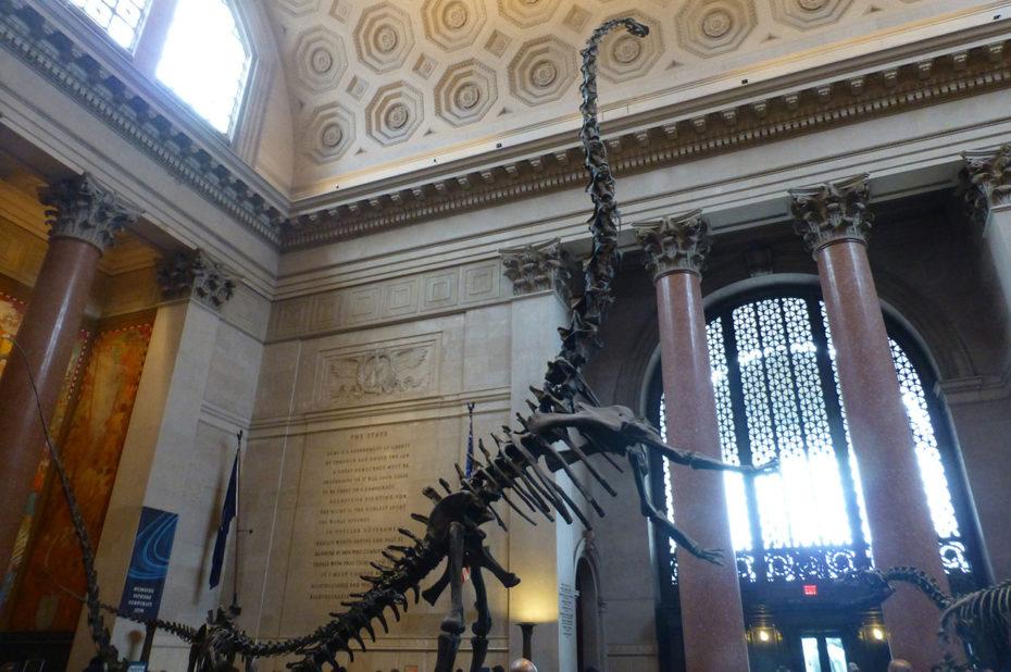 L'un des dinosaures à l'entrée du musée d'Histoire Naturelle