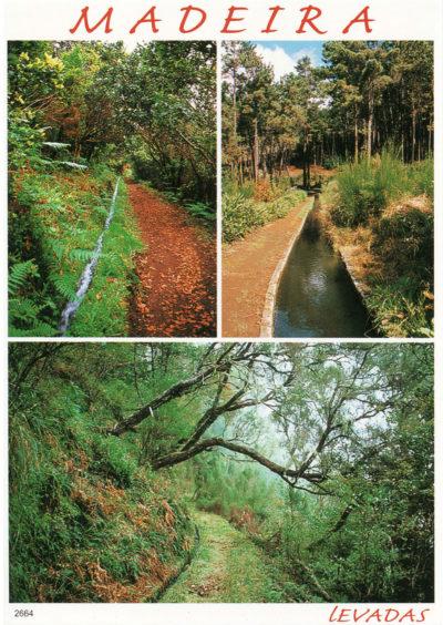 Les levadas, ces canaux d'irrigation qui sillonnent l'île