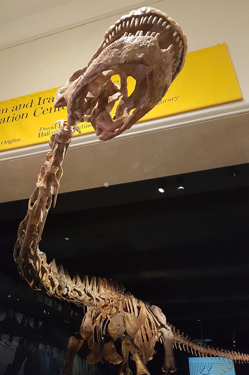 Le Titanosaure, plus grand dinosaure découvert sur Terre