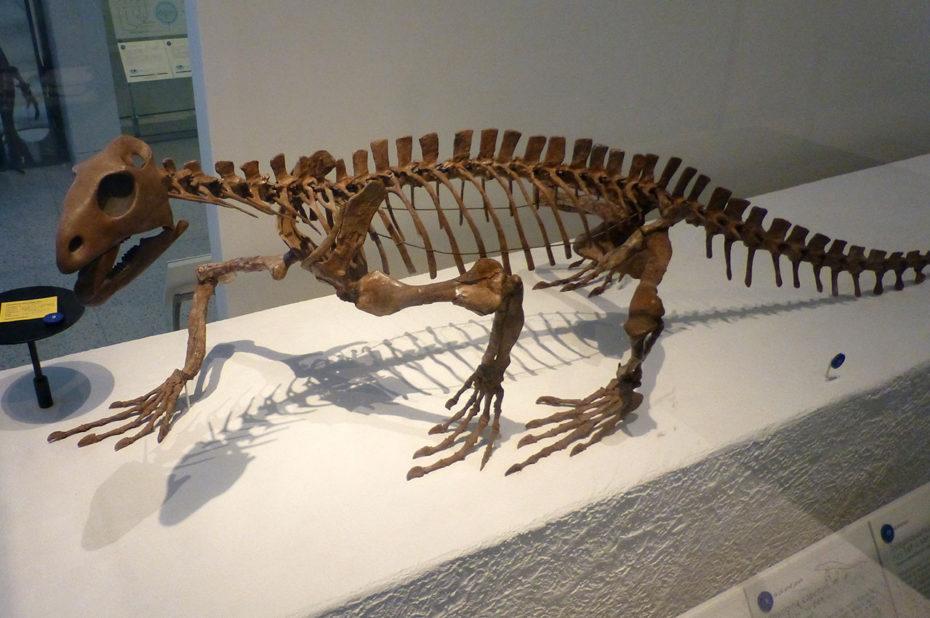 Trilophosaurus buettneri
