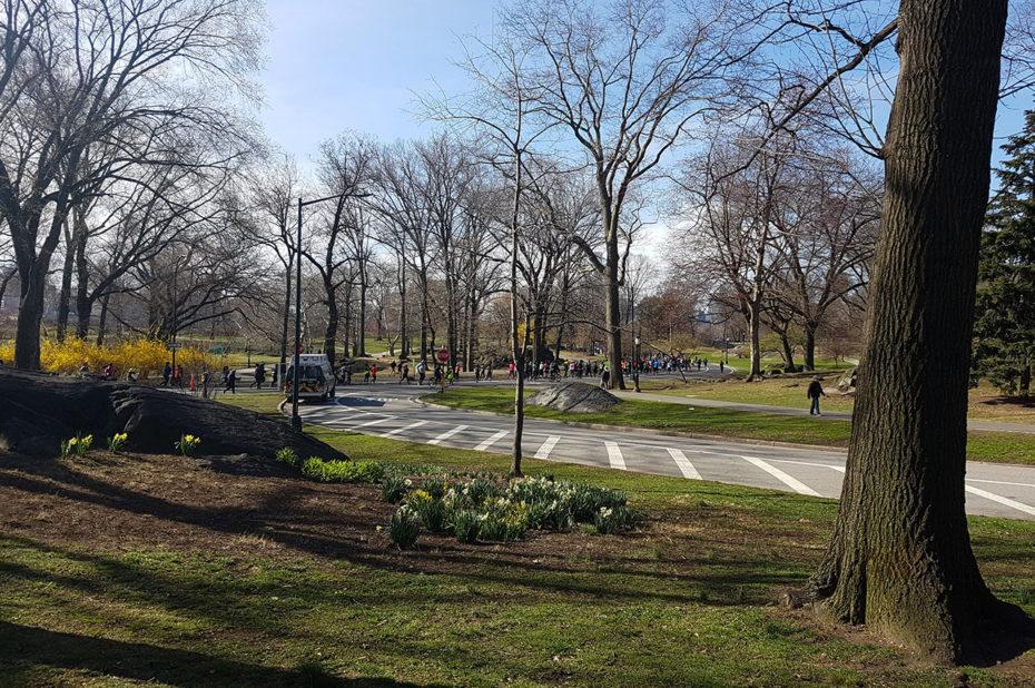 Une course à pied organisée dans Central Park le dimanche matin