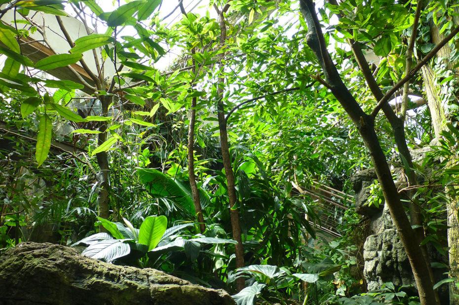 Dans la forêt tropicale du zoo
