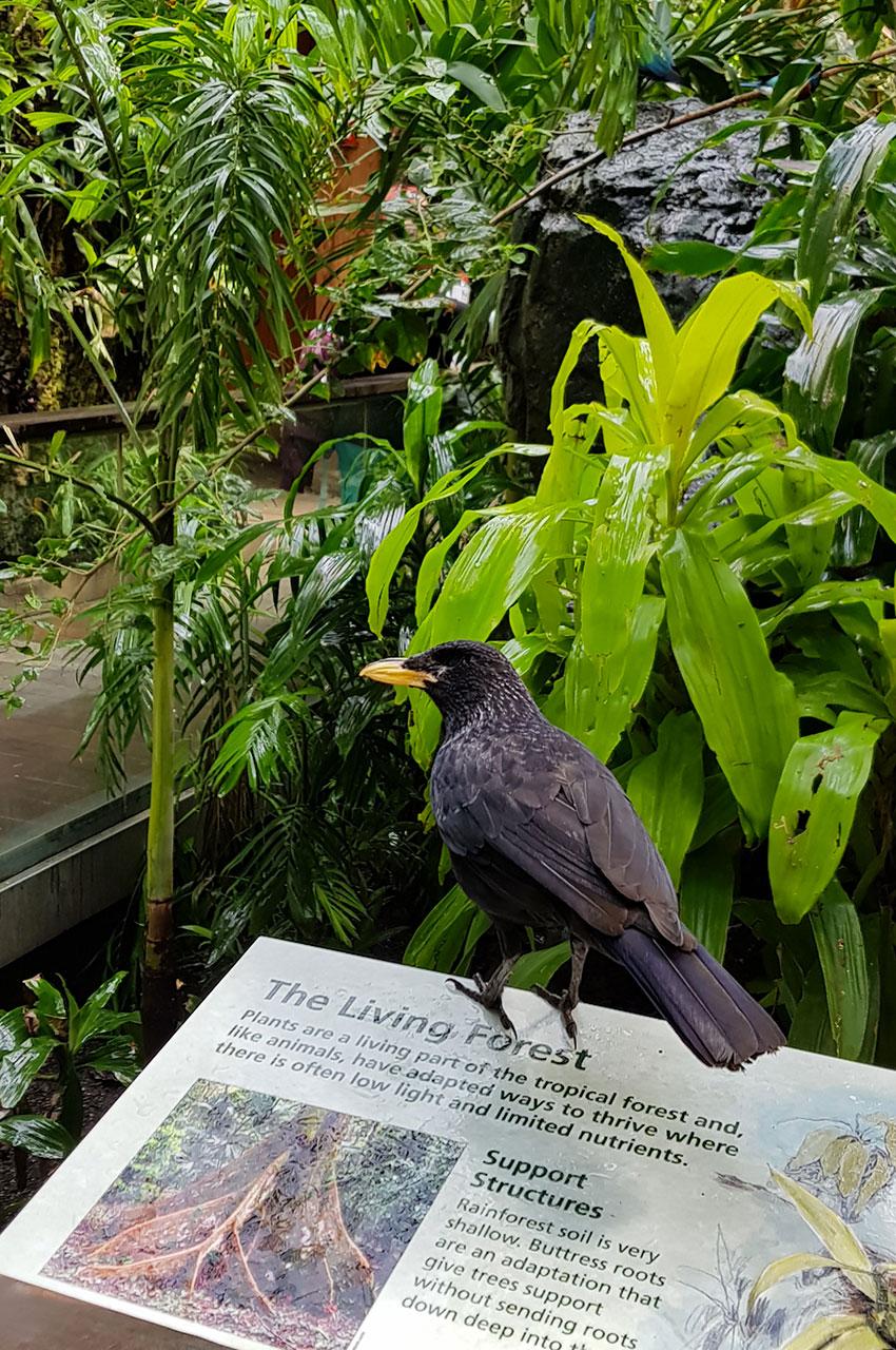 """Oiseau noir dans la """"forêt tropicale"""" du zoo"""