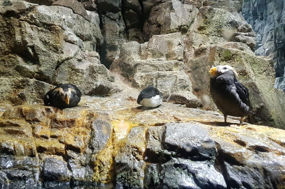 Oiseaux sur des rochers