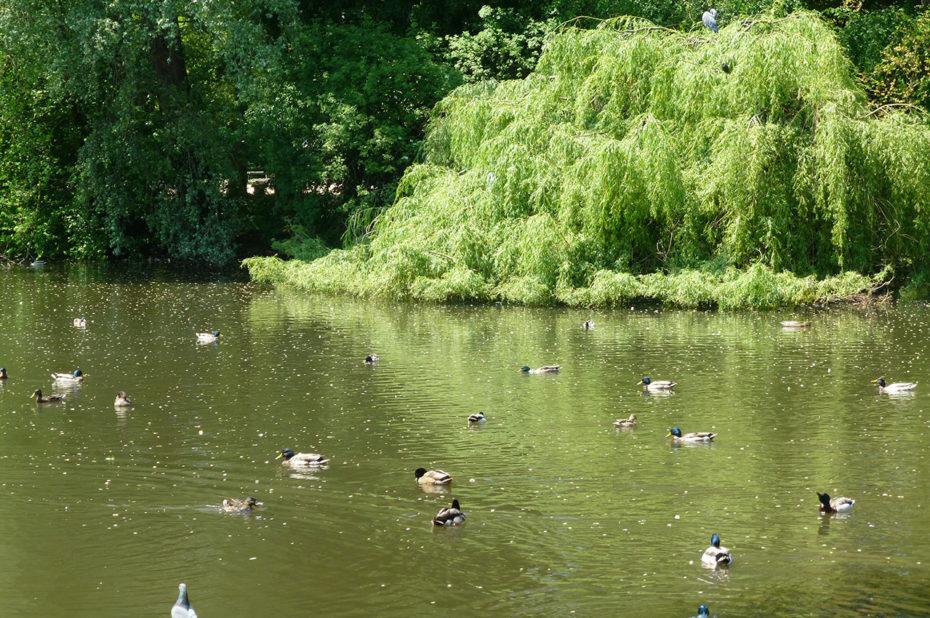 Mare aux canards au parc Vondelpark