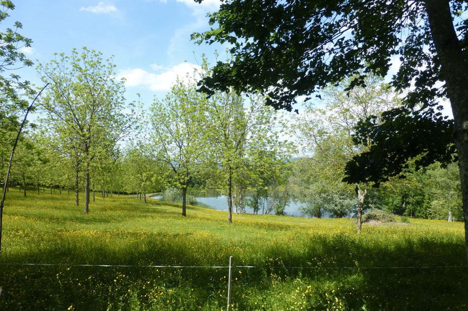 Lac et champs derrière l'abbaye