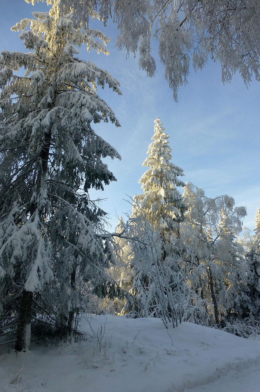 Ambiance glacée lors de la randonnée dans la nature à Oslo
