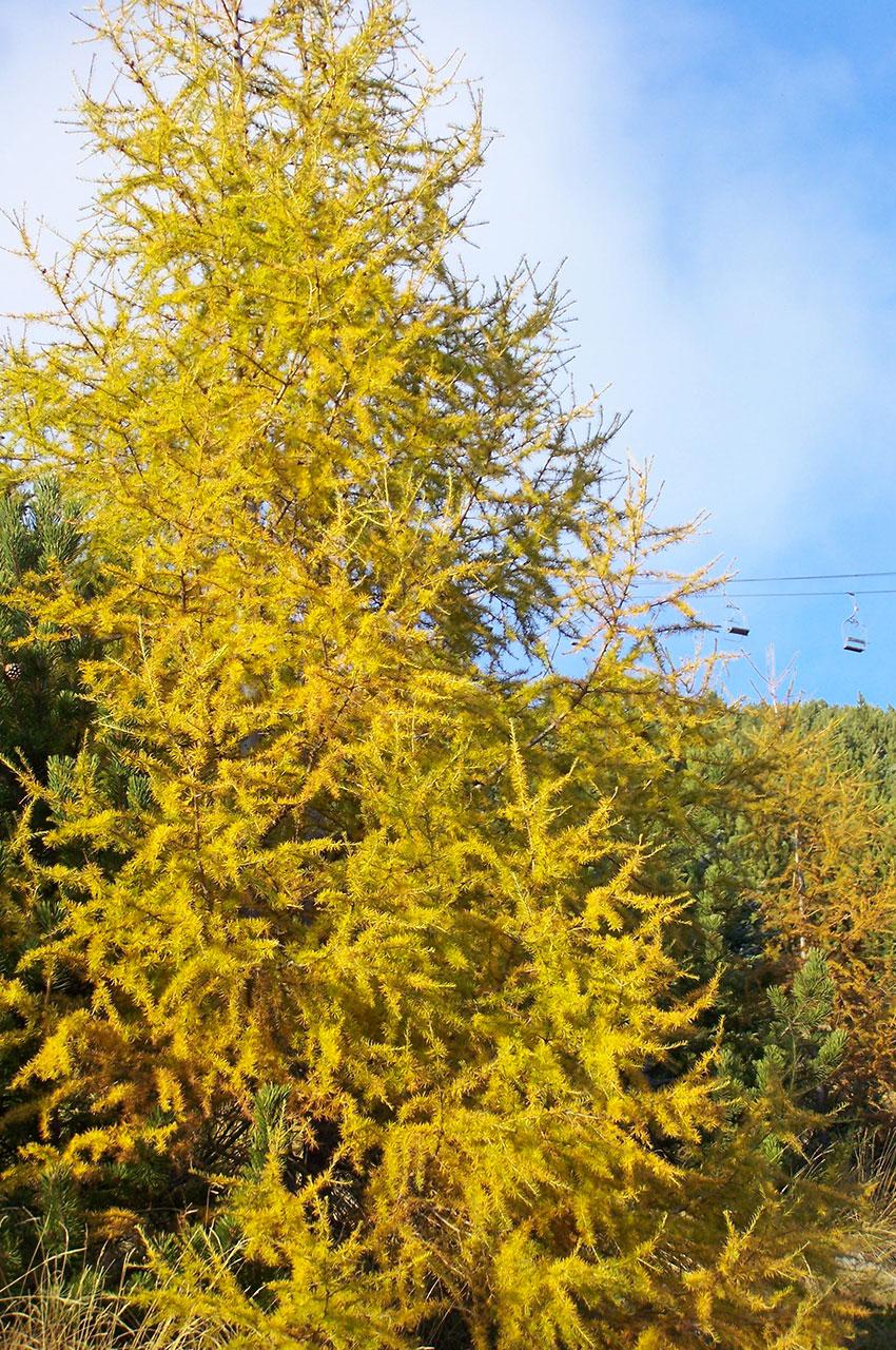 Arbres aux couleurs de l'automne avec un télésiège en fond