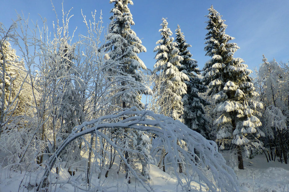 Balade dans la neige dans la forêt de Nordmarka