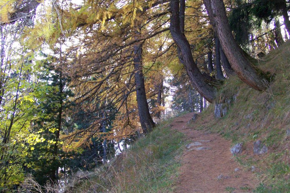 Le chemin qui monte dans la forêt d'Huez