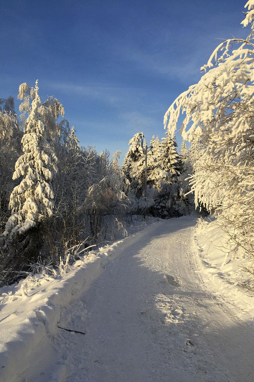 Chemin de randonnée dans la neige