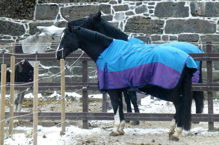 Les chevaux ont une couverture pour se protéger du froid