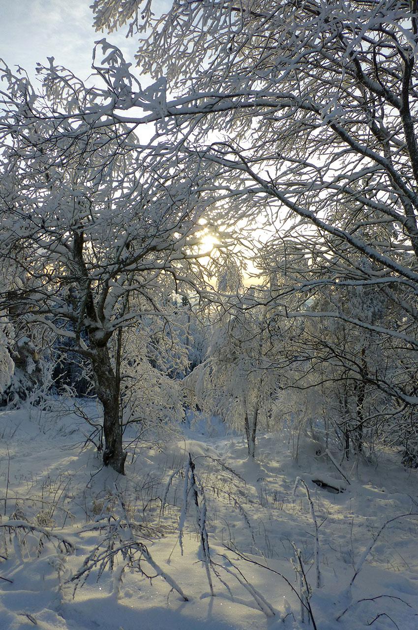 Au cœur de la forêt de Nordmarka