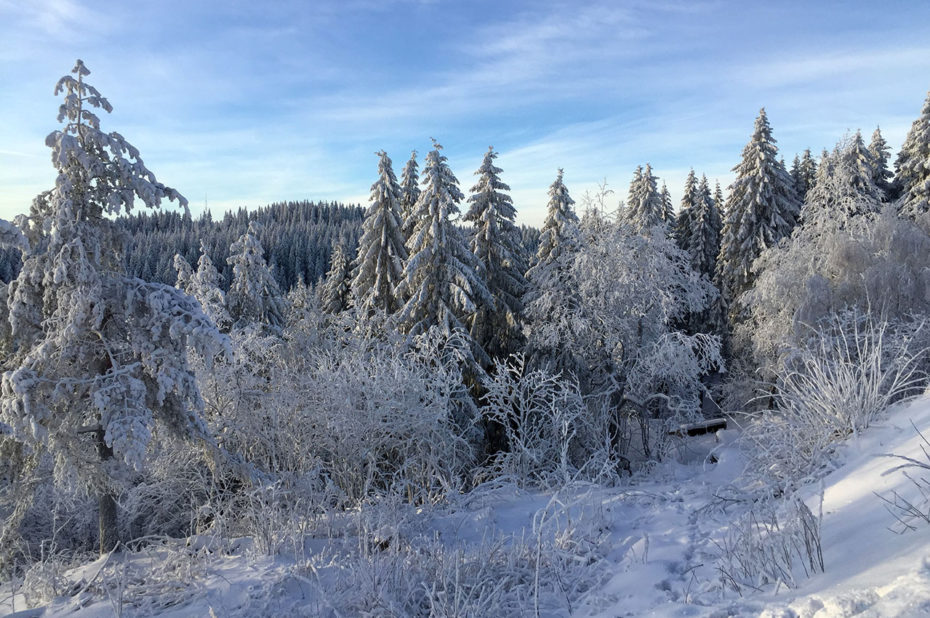 La forêt de Nordmarka à Frognerseteren