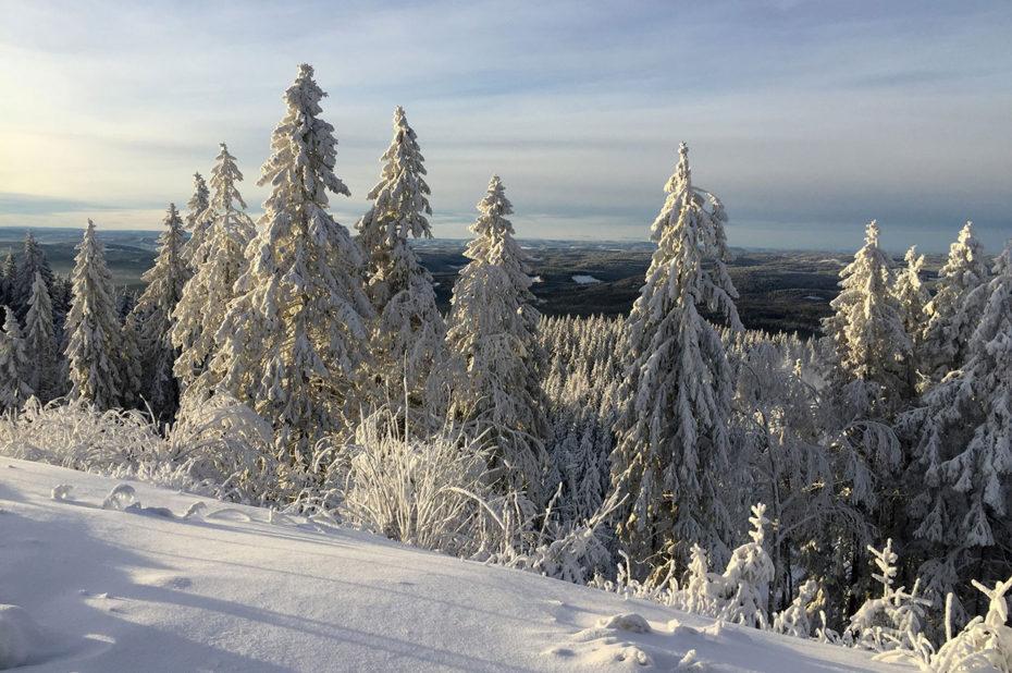 La forêt de Nordmarka s'étend à perte de vue