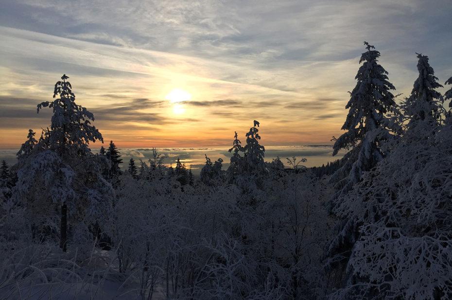 Dans la forêt de Nordmarka, le soleil d'hiver sur le fjord d'Oslo