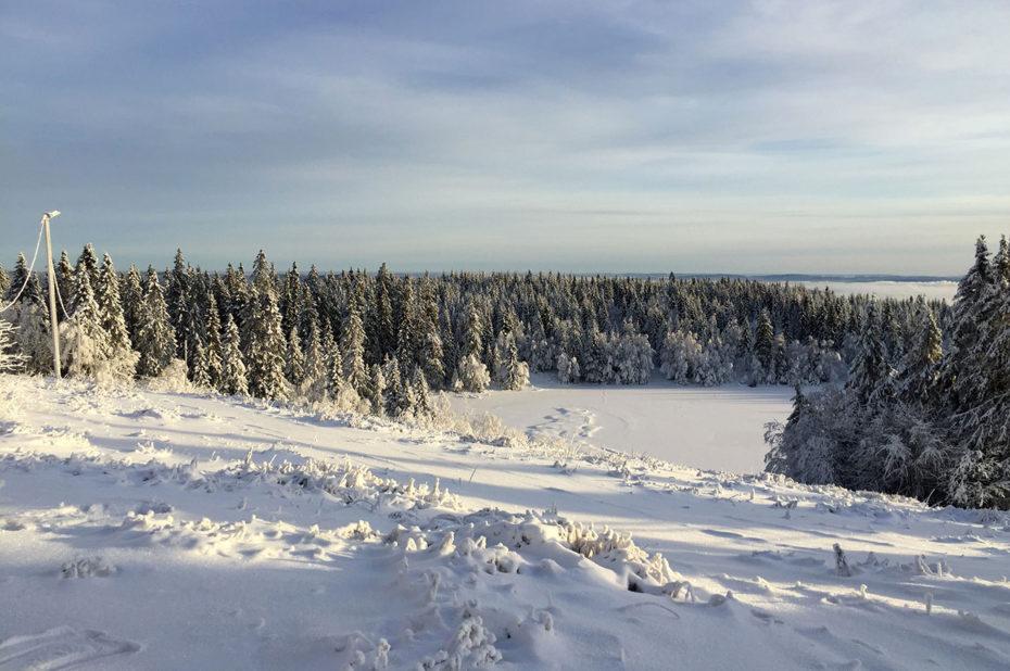 Sur les hauteurs du lac d'Øvresetertjern, entouré de sapins