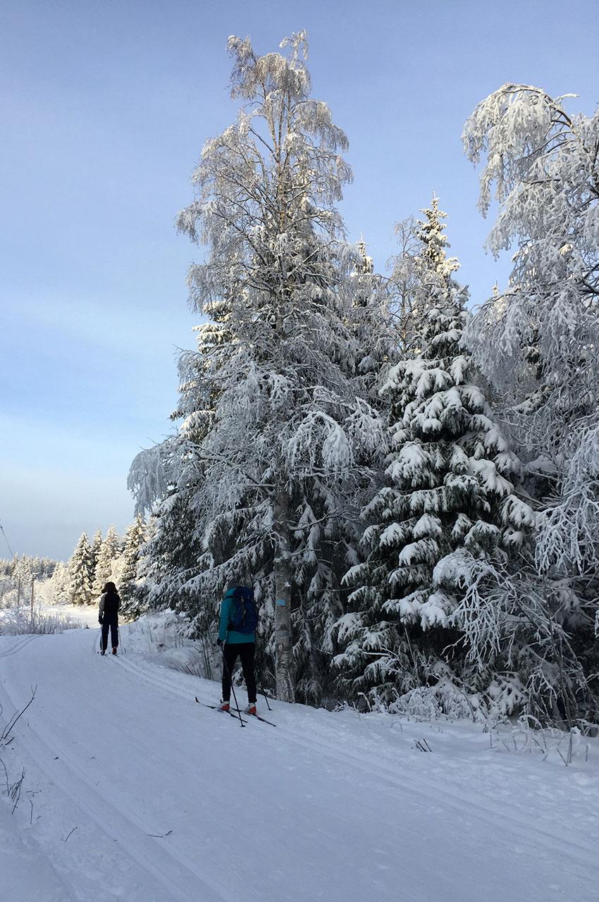 Piste de ski de fond au bord de la route à Frognerseteren
