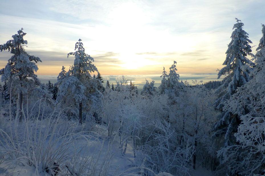 Soleil couchant sur le fjord entre les arbres gelés