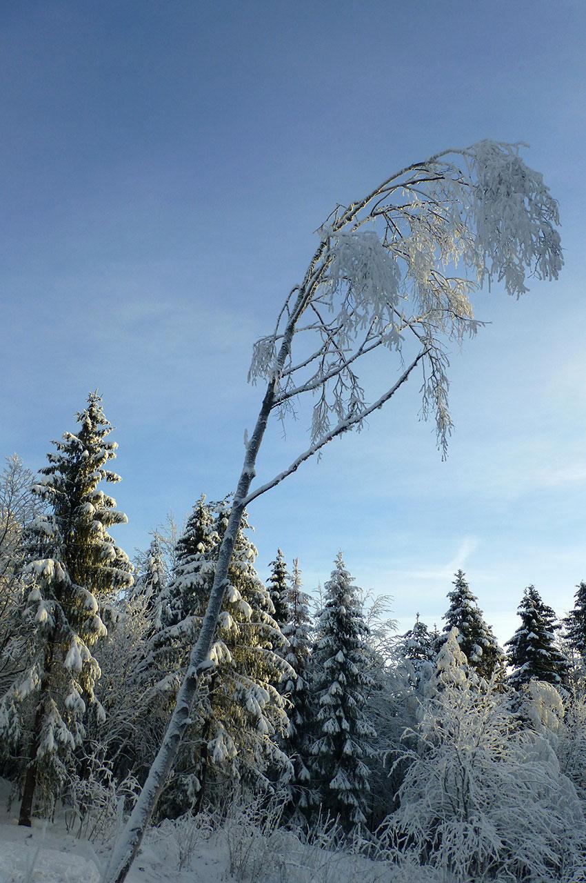 Un temps froid mais idéal pour une balade en forêt