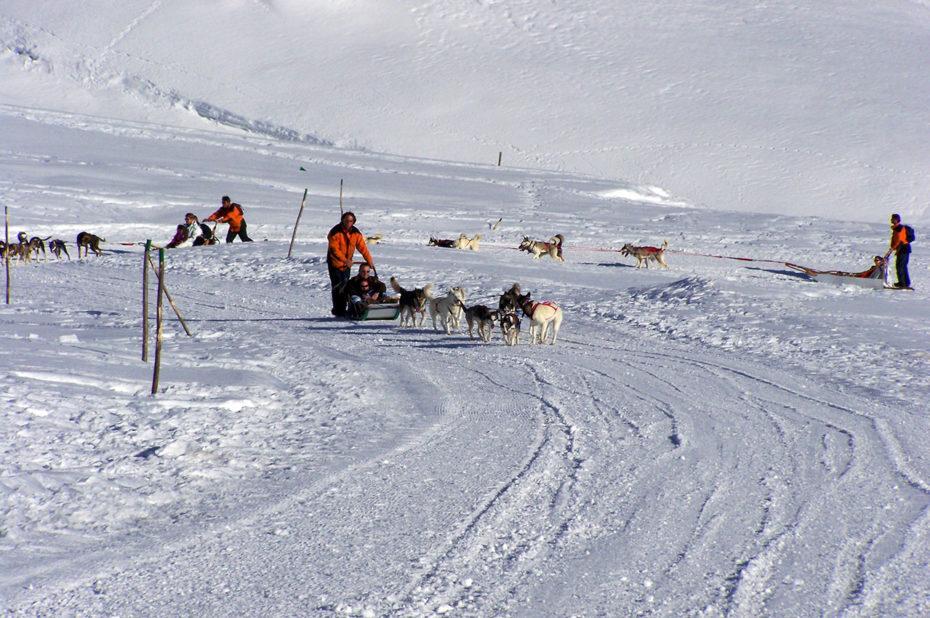 Les chiens de traineau, une activité d'hiver à l'Alpe d'Huez
