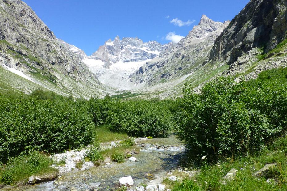Le Parc National des Écrins, entre minéral et végétal