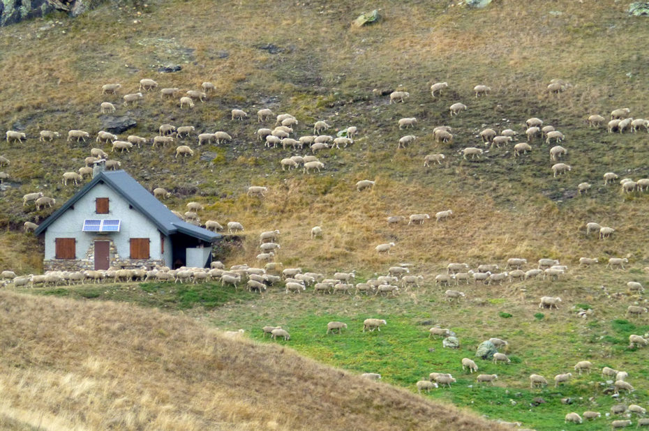 Une bergerie avec de nombreux moutons alentours