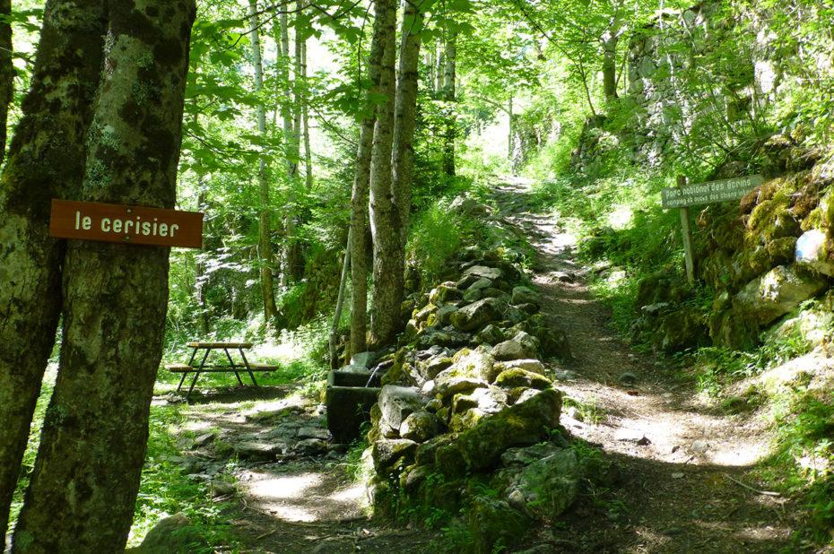 Lieu-dit Le Cerisier et le chemin qui grimpe dans le sous-bois
