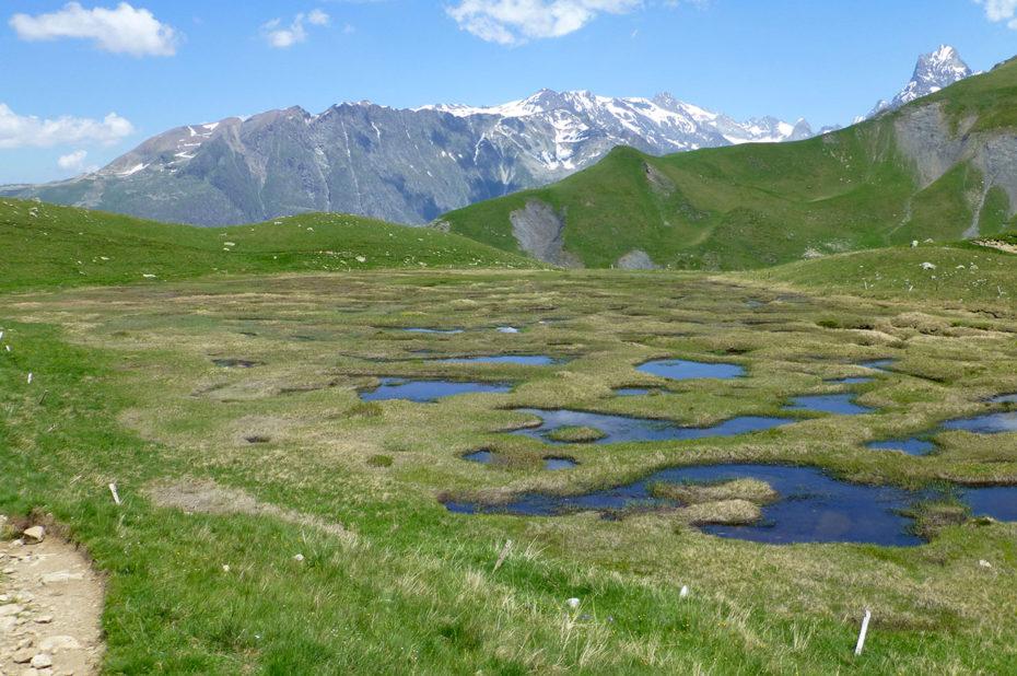 Tourbière à proximité du lac
