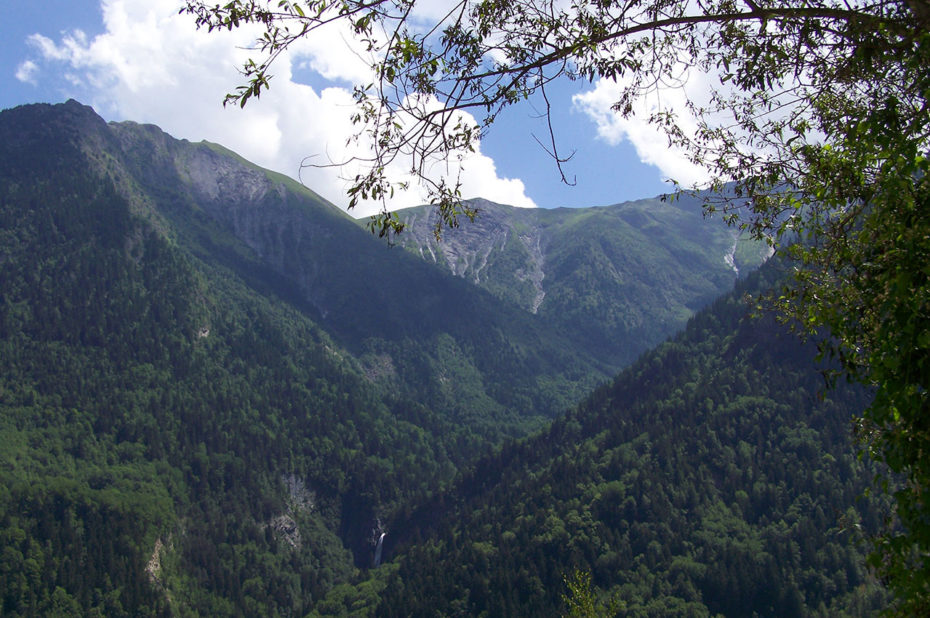 Forêt de conifères face au village de Vénosc
