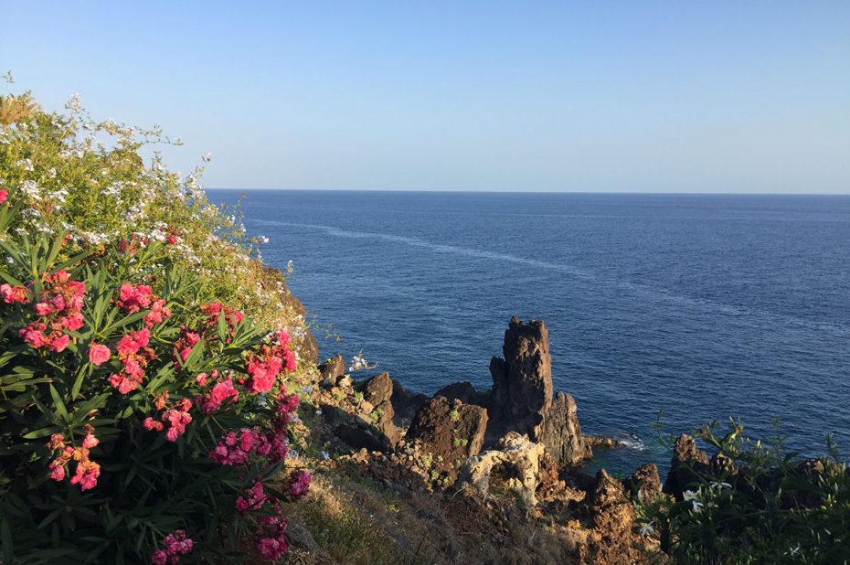 Fleurs sur la cote de Madère, au coucher de soleil