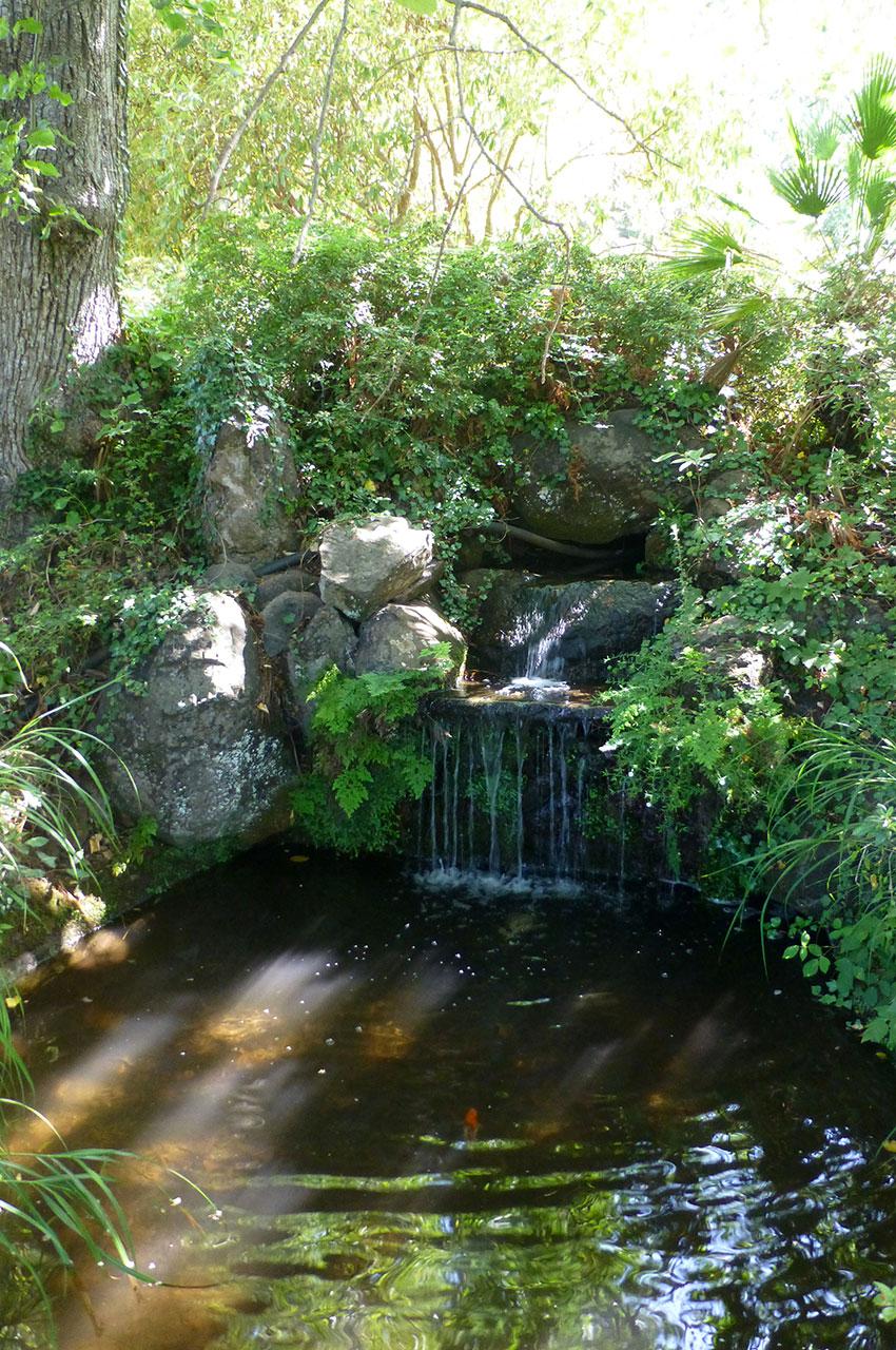 Petite fontaine et poissons dans les jardins