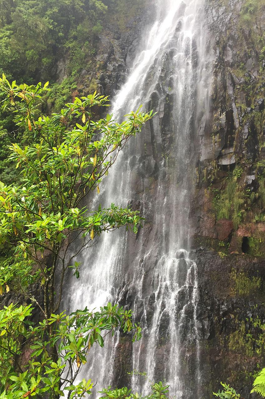La cascade de Risco, entourée d'une végétation luxuriante