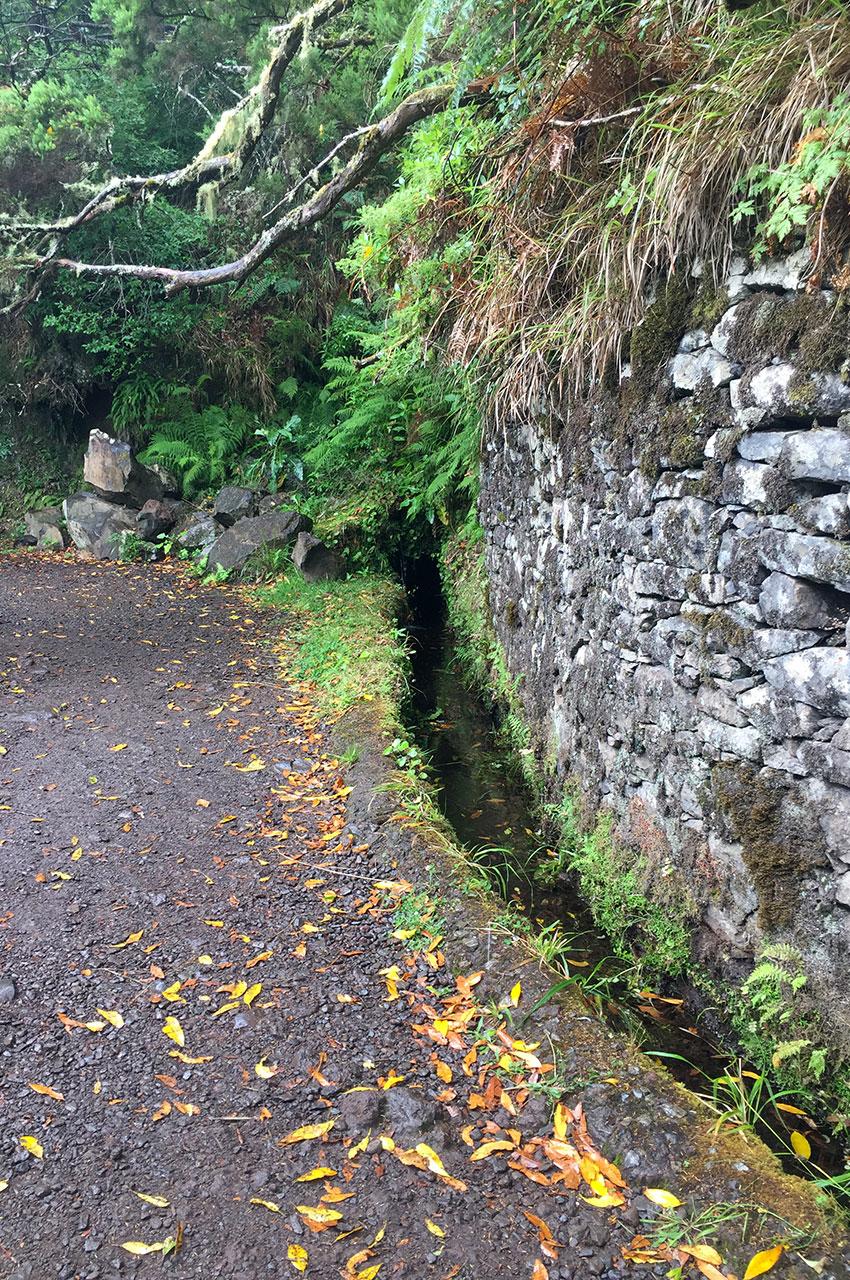 Le chemin de randonnée le long d'une levada