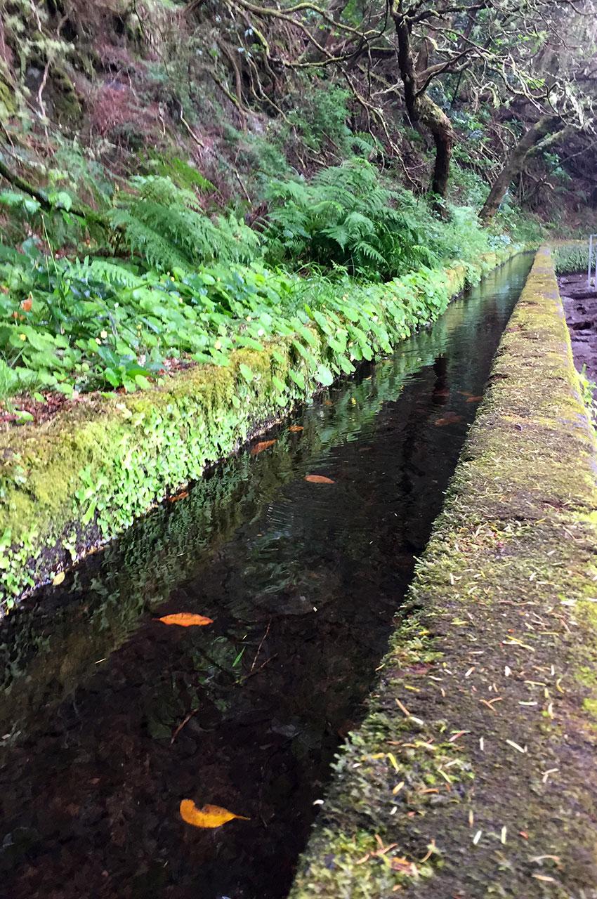 Feuilles à la surface de l'eau
