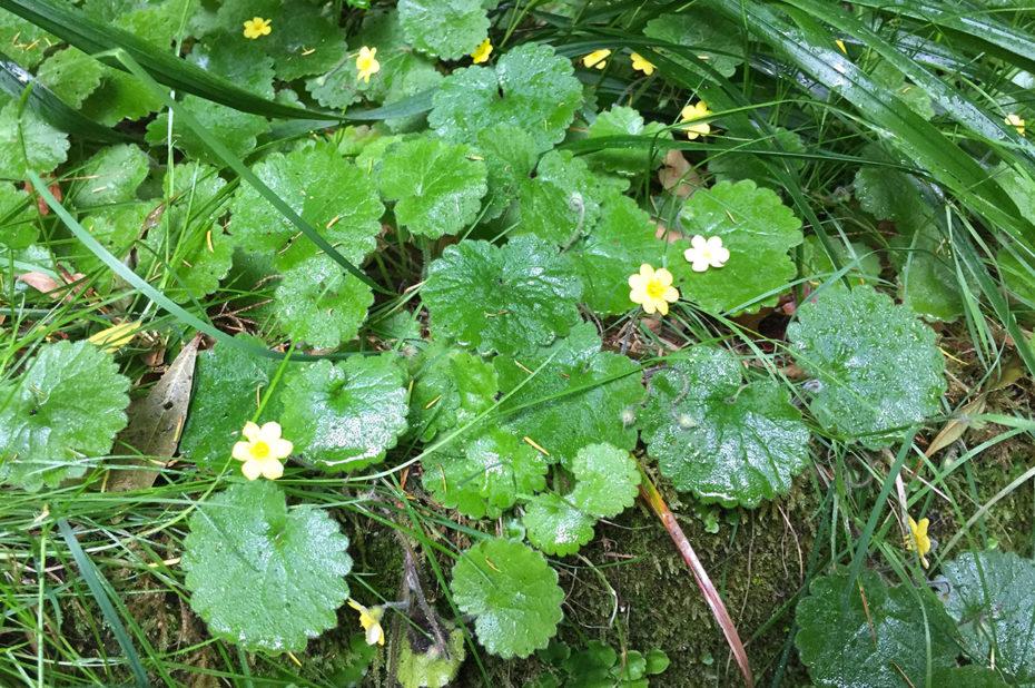 Petites fleurs jaunes au bord du chemin