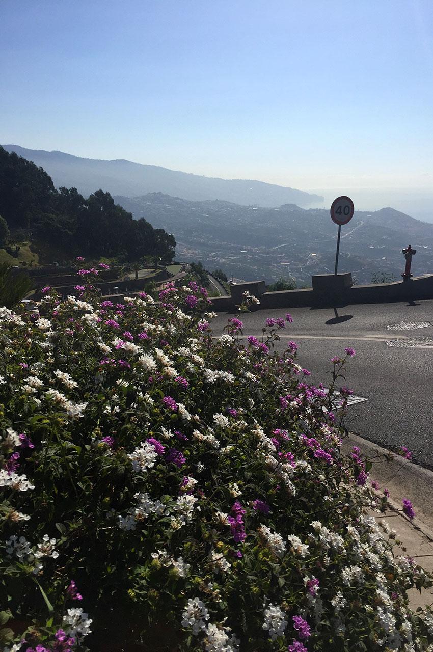 Bosquet de fleurs au bord de la route