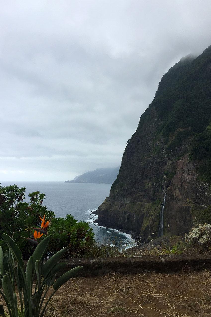 Oiseau de Paradis face aux falaises par mauvais temps