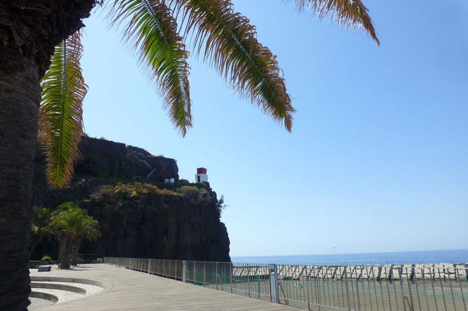 Avenue bordée de palmiers le long du port