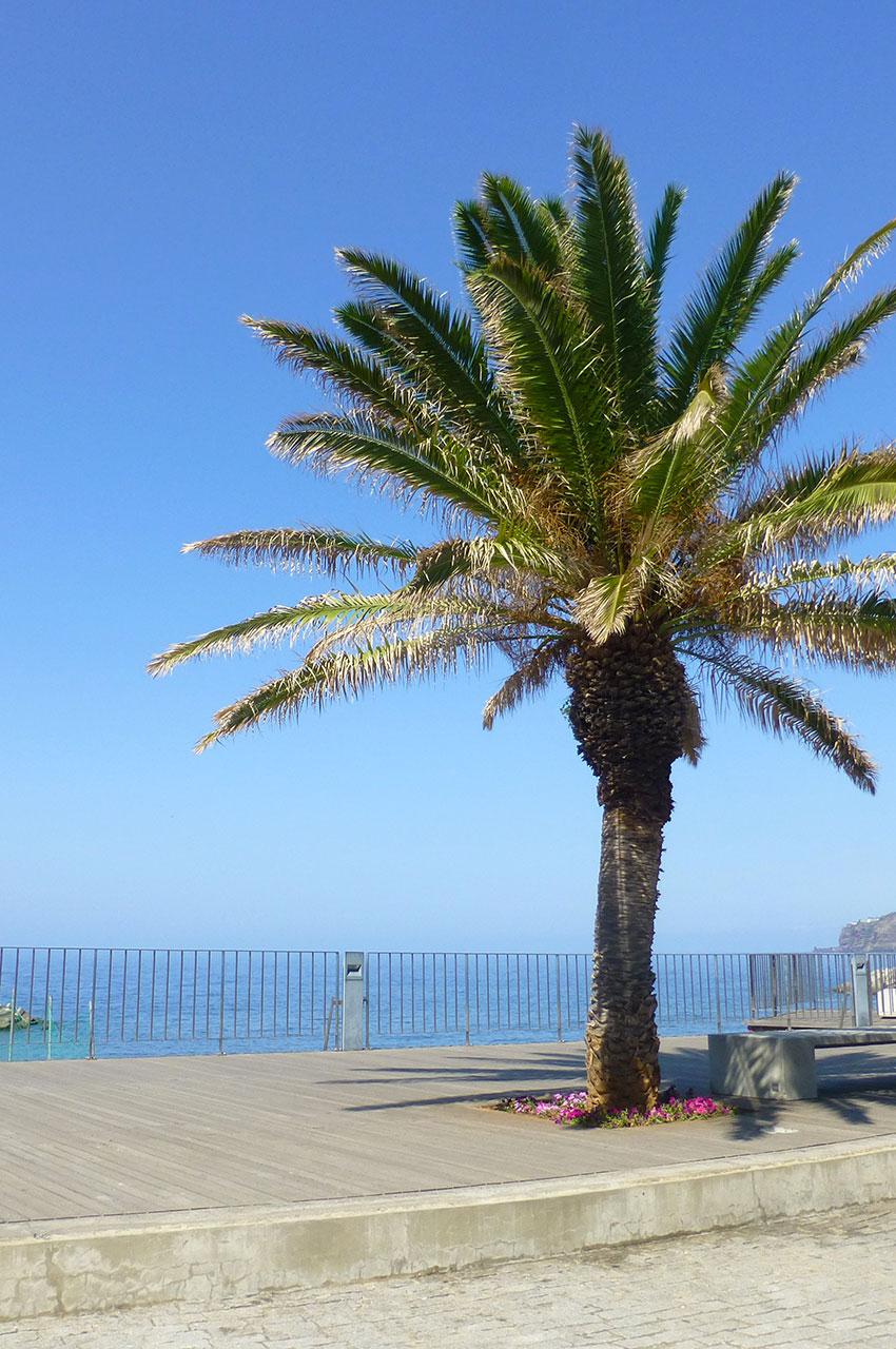Palmier sur l'avenue le long du port