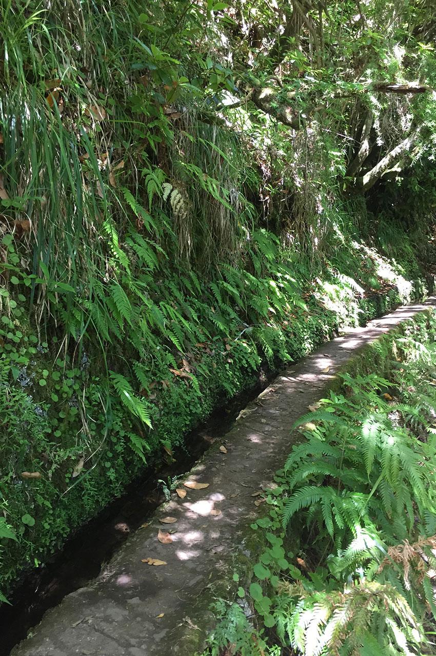 Cadre verdoyant autour de la levada do Caldeirão Verde