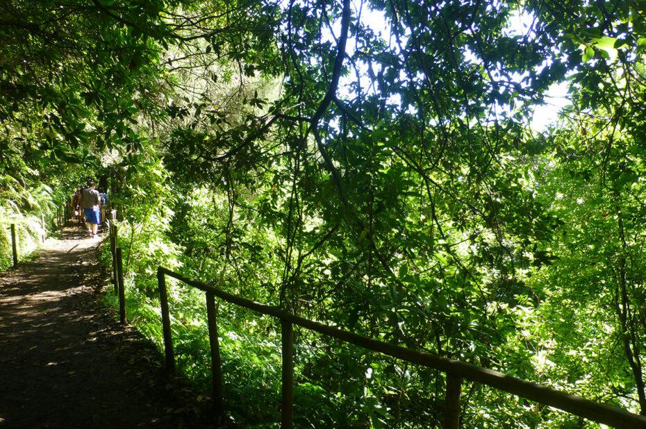 Sur le chemin de randonnée, à l'ombre des arbres