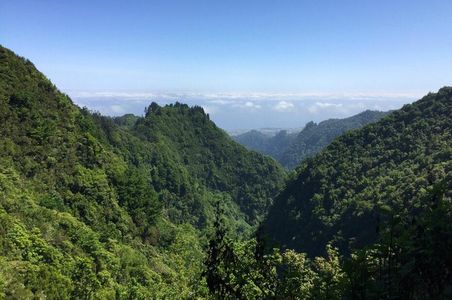La forêt laurifère de Madère couvre les montagnes du centre de l'île