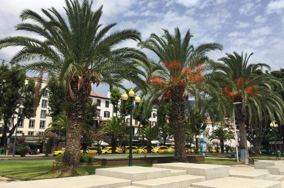 L'avenida do mar et ses palmiers