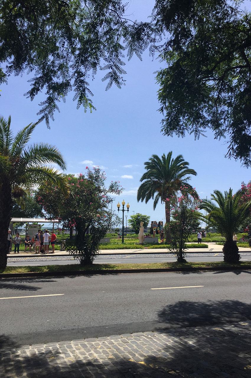 Nombreux arbres sur l'avenida do mar