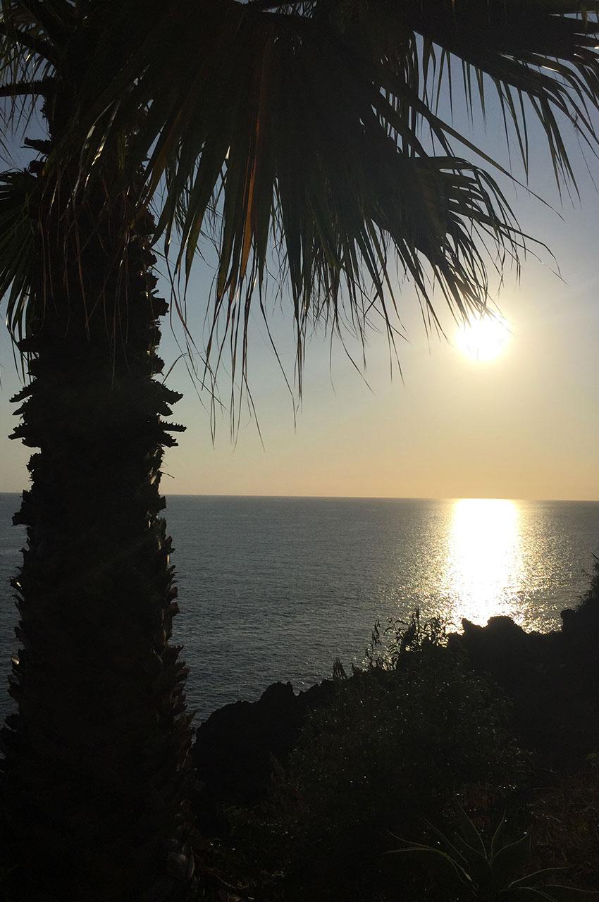 Palmier et coucher de soleil